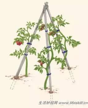几何形植物修剪整形psd素材